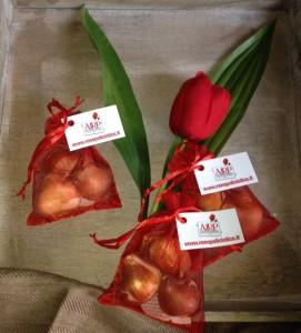 Bulbi tulipano